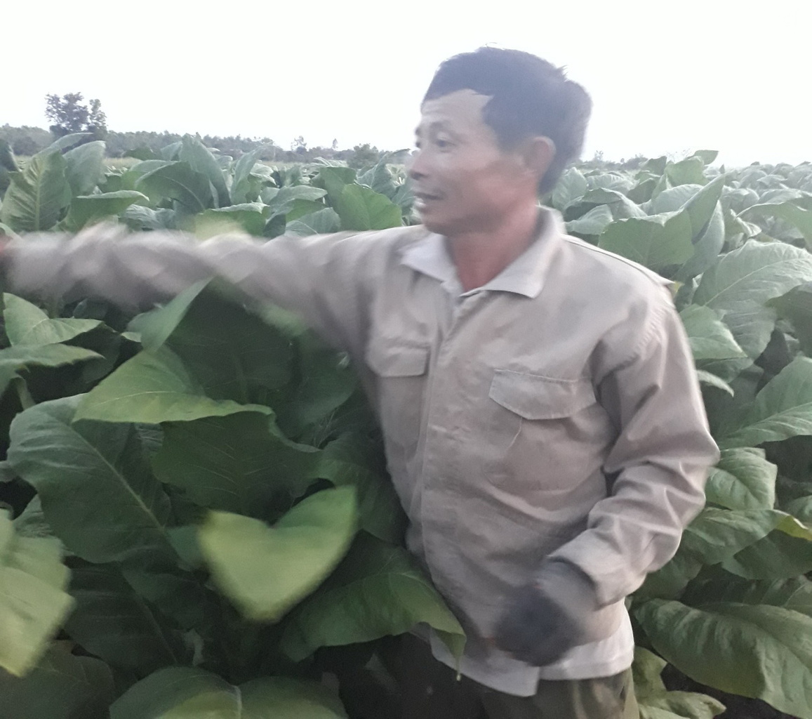 Nguyen Gia Cuong.jpg (273 KB)
